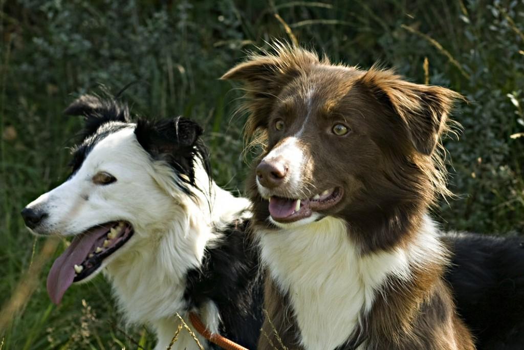 Milly en Zoey