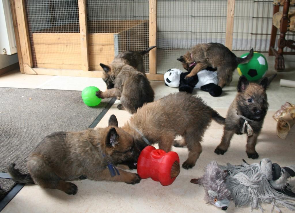s-pups-vijf-weken1