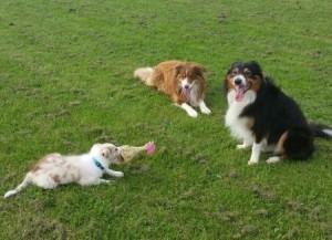 Ronan, Mowgli, Davey